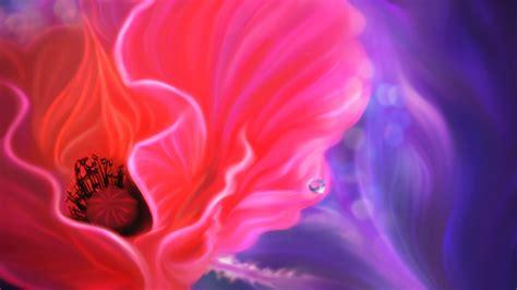 full hd wallpaper petal close  insubstantial pink violet
