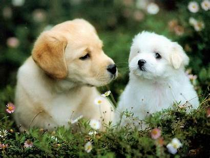 Puppy Puppies Dog Wallpapers Pixelstalk