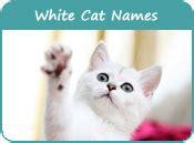 white cat names white cat names distinctive names for white kittens page 1