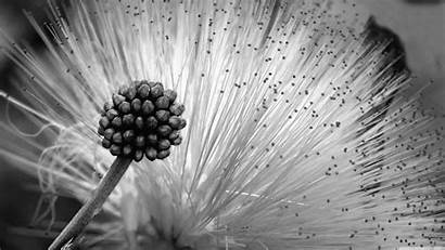 Flower Flowers Wallpapers Desktop Background Ultra Fluffy