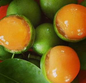 Forum: Melicoccus Bijugatus (mamoncillo Or Spanish Lime)