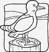 Coloring Pages Seagull Cliparts Jail Birds Bird Cell Clip Chain Tattoo Draw Tweety Motorcycle Clipartbest Coloringpages101 Clipart sketch template