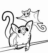 Glider Sugar Coloring Gliders Drawing Svg Animal Clipart Template Printable Sugarglider Animals Drawings Silhouette Colouring Clip Realistic Pet Sheet Glidergossip sketch template