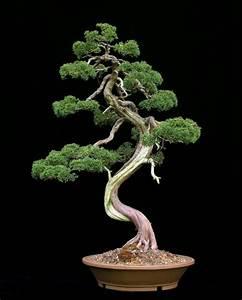 Prachtvolle bonsai arten archzinenet for Garten planen mit bonsai acer