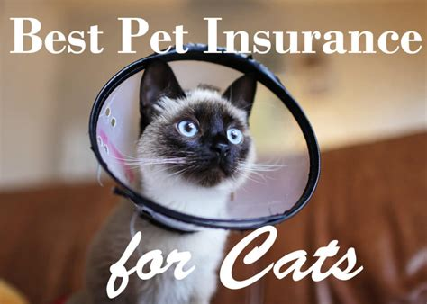 To find the best pet insurance, we looked for providers with widespread availability, flexible coverage plan options and excellent customer reviews. Best Pet Insurance Companies for Cats In 2020   Cat Mania