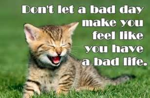 Inspirational Quotes About Cats
