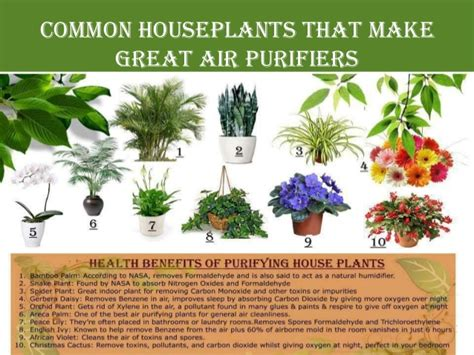 Benefits Of Plants In The Home
