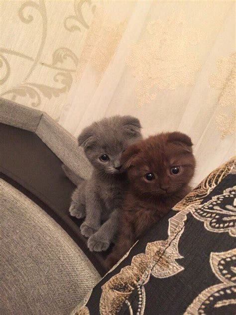 Adorable Cat and Kitten
