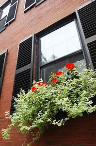 How, To, Have, Beautiful, Window, Boxes