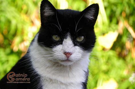 Black And White Cats Catnip Camera
