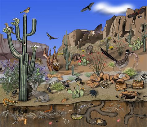 cuisines az desert ecosystem images imgkid com the image kid