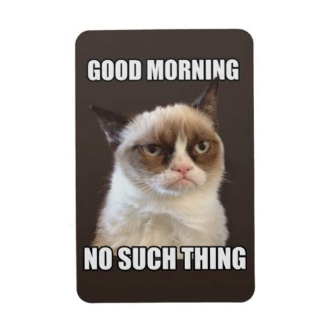 Grumpy Cat Good Morning Meme - 1000 images about grumpy cat on pinterest grumpy cat quotes cats and grumpy cat birthday