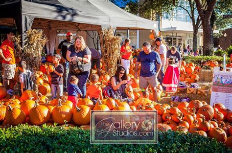 Pumpkin Patch Tampa Fl 33615 by Pumpkin Patch In Hyde Park Tampa Fl Free Download Programs
