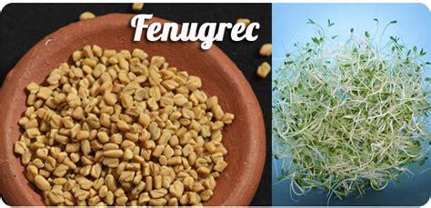 fenugrec cuisine les épices en cuisine tandoori fenugrec muscade cumin