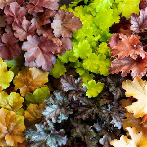 perennials foliage fall gardening guide sunset