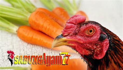 kuatkan jantung ayam  menggunakan pakan wortel