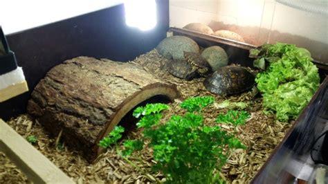 aquarium pour tortue terrestre aquarium pour tortue terre
