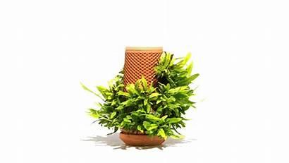 Terraplanter Planter Hydroponic Plant Seed Kickstarter Plants