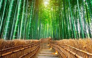 15 Stunning Pictures Of Japan