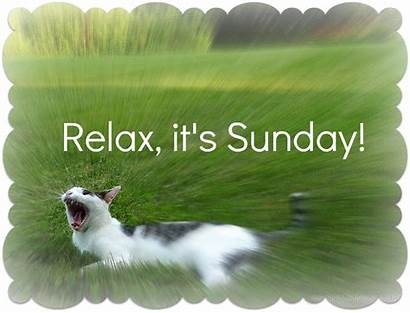 Quotes Cat Sunday Relax Relaxed Its Quote