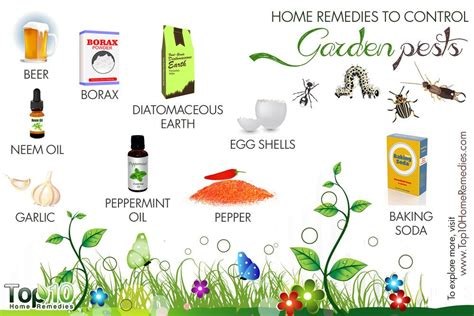 home remedies to garden pests top 10 home remedies