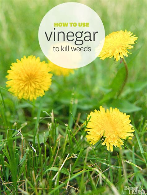 Vinegar As Weed Killer