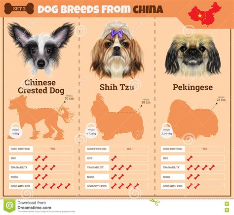 dogs breed infographics types  dog breeds  china