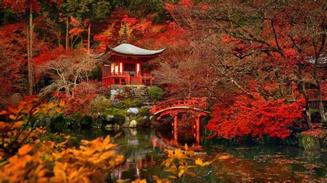 autumn japan kyoto hd wallpaper background