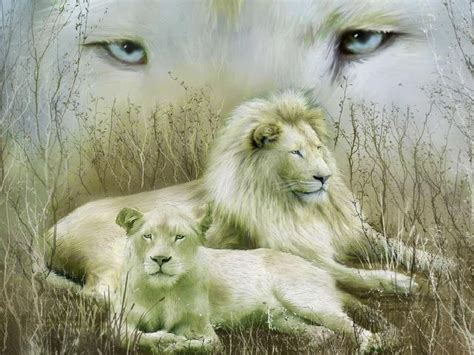 Lovable Images: White Lion Hd Wallpaper Free Download