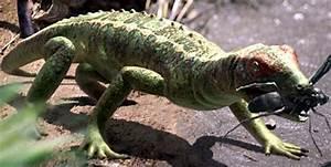 Petrolacosaurus | Scratchpad | FANDOM powered by Wikia
