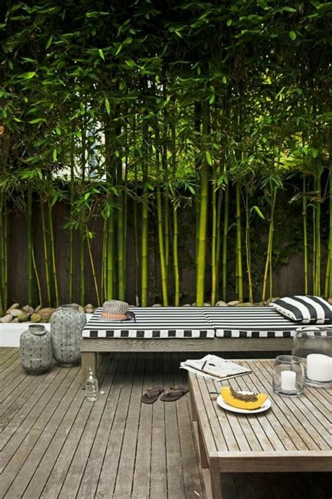 comptoir du jardin bambou gramin 233 e donnez de la structure 224 votre jardin
