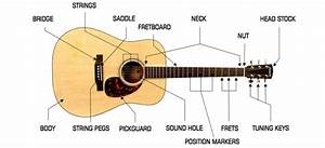 Parts Of An Acoustic Guitar  Head Stock  Tuning Keys And