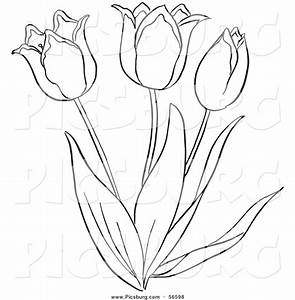 Tulip Outline Coloring Coloring Pages