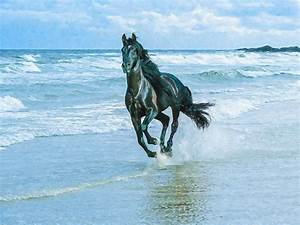 Beautiful Black Horses Running - Hot Girls Wallpaper