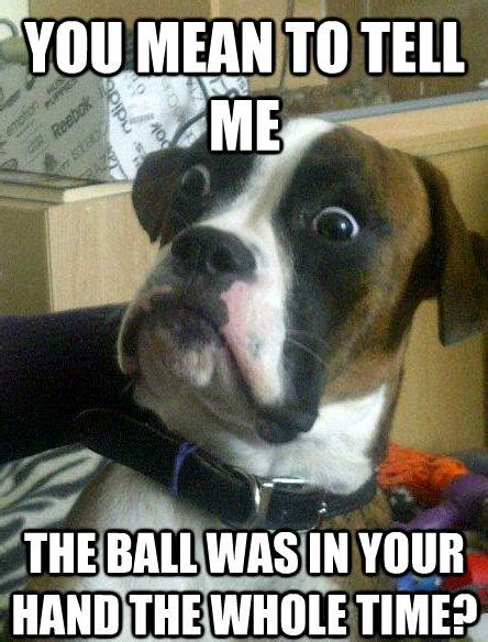 25 memes part 2 dogtime