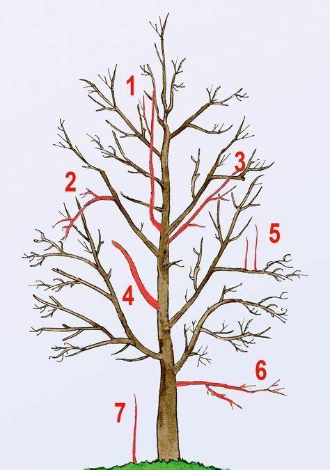 Bonsai Bäume Pflege 3243 by Baum Schneiden Wann Und Wie H Ngebirken Schneiden Und