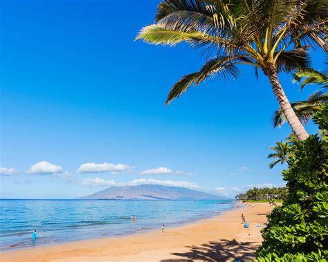 하와이 해변 해안 야자수 4k 고품질시사 10wallpapercom