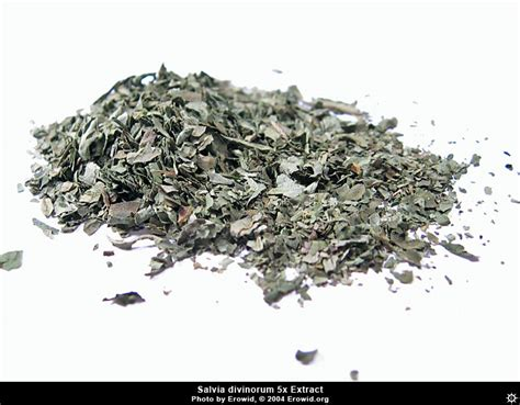 erowid plants vaults images salvia divinorum extract