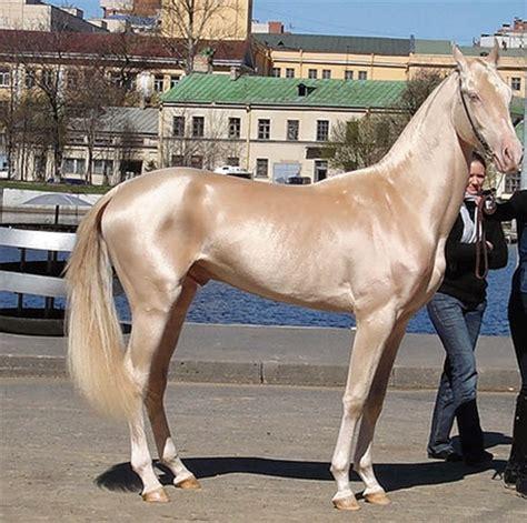 horses most