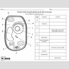 Plant And Animal Cells Worksheets For Middle And High School Students  Worksheets, High School
