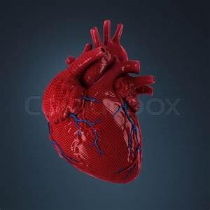 3d Rendered Human Heart
