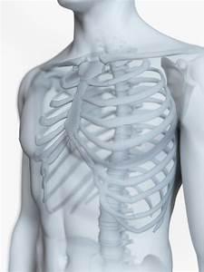 The Male Skeletal Anatomy Stock Illustration  Illustration