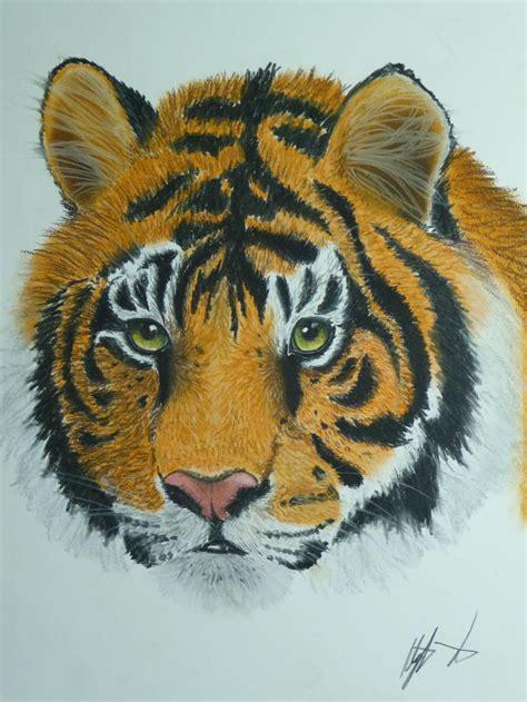 tiger  farbe streifen gesicht katze augen von aley