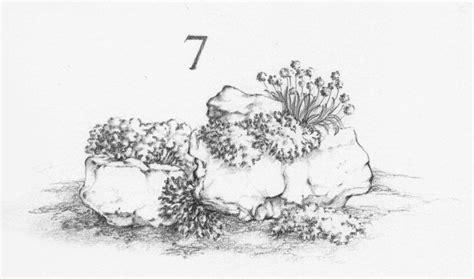 costruire un giardino roccioso costruire un giardino roccioso compagnia giardinaggio