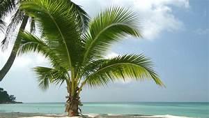Bilder Von Palmen : 8 wir lieben palmen renartis reisen ~ Frokenaadalensverden.com Haus und Dekorationen