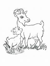 Goat Billy Goats Gruff Coloring Pages Drawing Cute Three Drawings Printable Getdrawings Getcolorings Paintingvalley sketch template