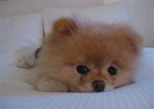 Dog cutest, cute dog pictures, world s cutest dog - Funny ...  Cutest