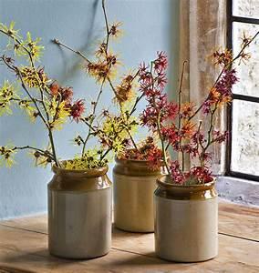 Quoi Planter En Automne : planter en janvier quels arbustes planter en janvier l ~ Melissatoandfro.com Idées de Décoration