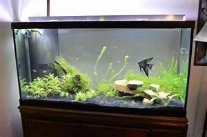 Aquarium Dekorieren Ideen : aquarium einrichten ~ Bigdaddyawards.com Haus und Dekorationen