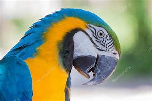 Blue and Yellow Macaw Parrot in Bali Bird Park,, Indonesia ...